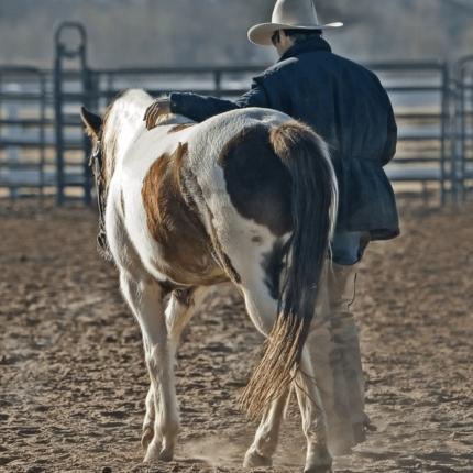 Seguro de granja y de rancho de Gress Kinney Parrish Insurance Center